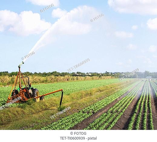 Tractor watering field, Florida, United States