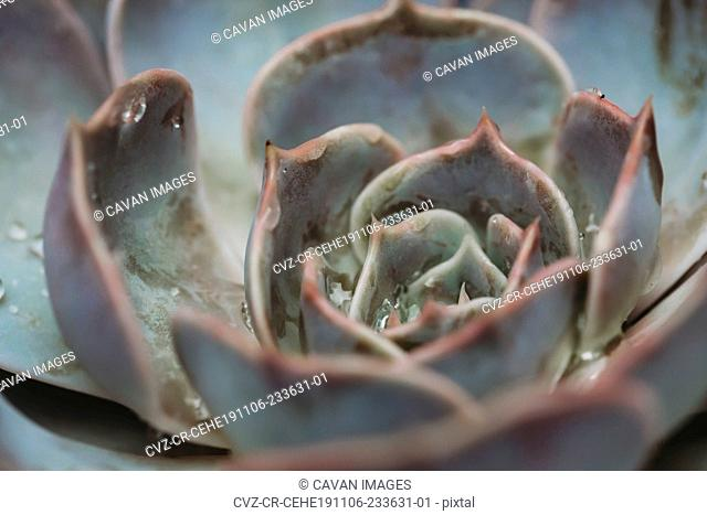 Close-up view of succulent