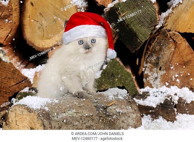 CAT.Kitten sitting on log in snow