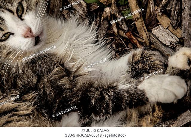 Cat Portrait, Close-Up