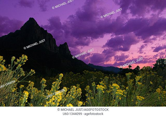 Colorful flowers and sky surround the Watchman Mountain at Zion National Park,Utah