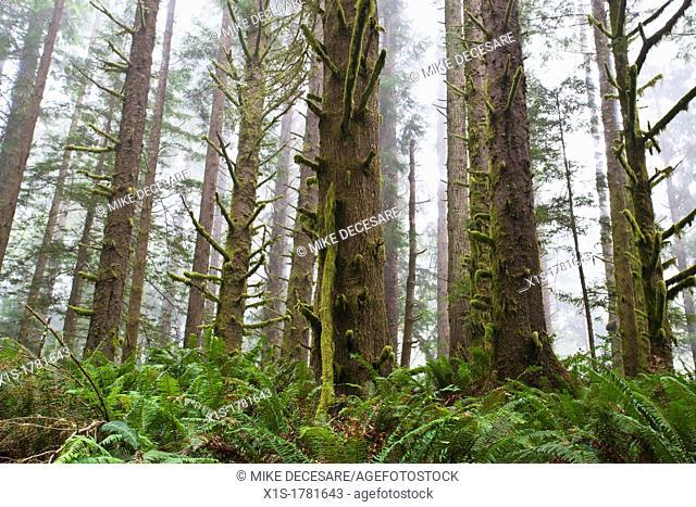 Fog moves into Redwood forest