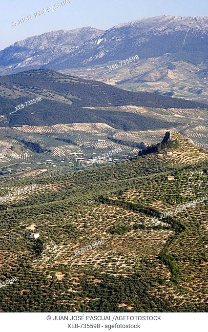 Olive groves. Jaen province, Andalucia, Spain