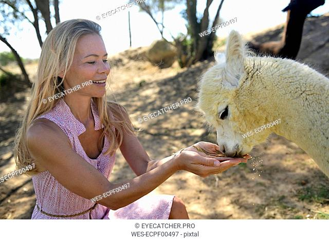 Blond mature woman with drinking young alpaca