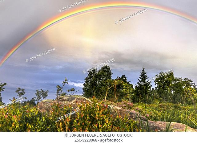rainbow over the landscape of the Black Forest, Germany, typical bunter sandstone and bilberry bushes in foreground, mountain Schliffkopf