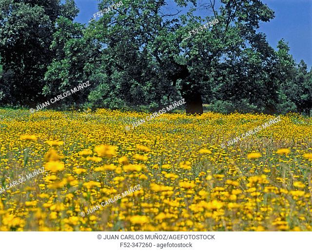 Rebollos meadow. Tietar valley. Cáceres province. Spain