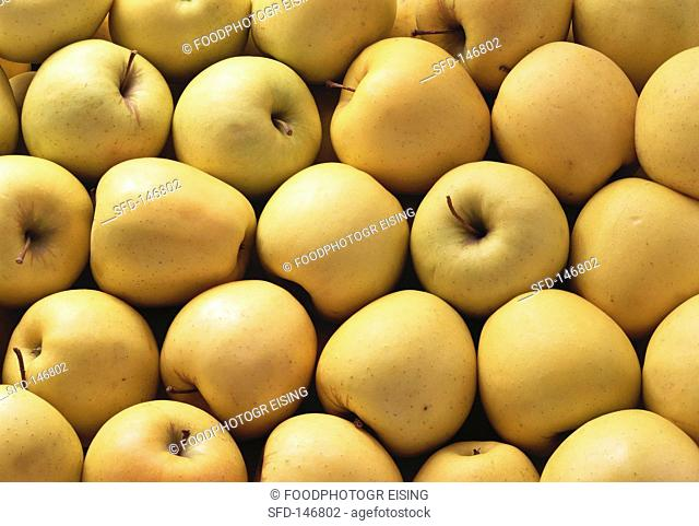Lots of Golden Delicious apples