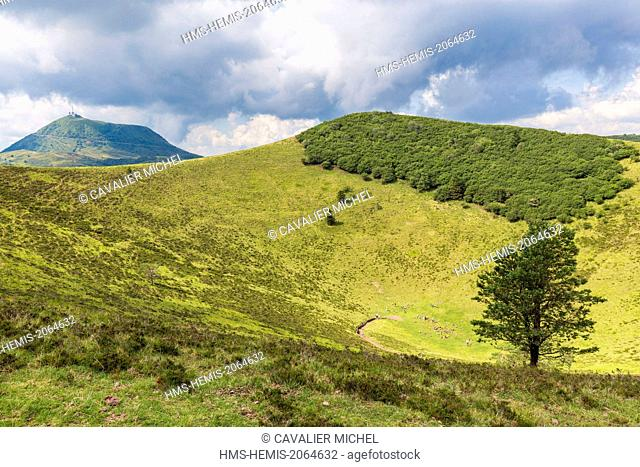 France, Puy de Dome, Parc Naturel Regional des Volcans d'Auvergne (Regional Natural reserve of the Volcanoes of Auvergne), Chain of Volcanic hills, Orcines