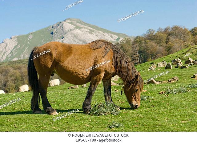 Horse grazing outdoors, Navarra, Spain