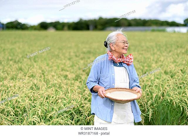 Smiling elderly woman with grey hair standing in a rice field, holding bowl with freshly harvested rice grains