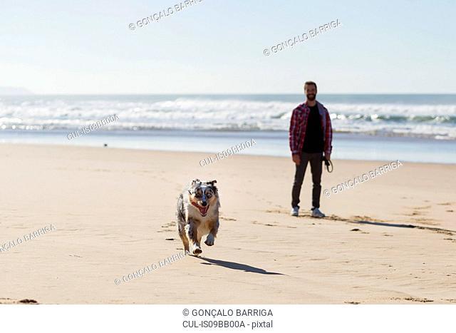Man watching his dog run on beach