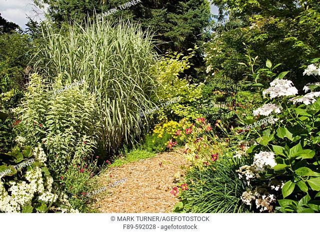 Snowflake' Oakleaf Hydrangea, 'Nora Leigh' Phlox foliage, 'Cosmopolitan' Miscanthus, 'Lanath White' Hydrangea, Daylilies in sunny perennial border [Hydrangea...