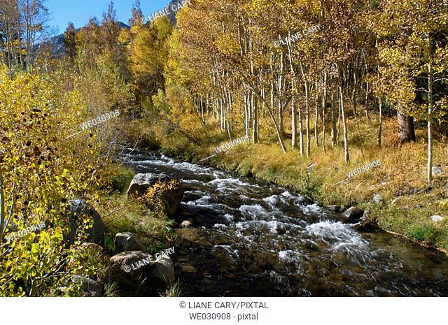 Autumn stream. California, USA