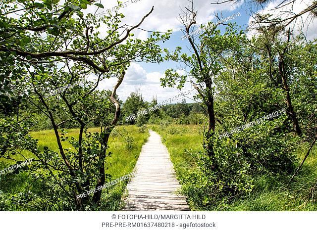 Track at Hühnerfeld nature reserve, Kaufunger Wald, Göttingen district, Lower Saxony, Germany / Weg durch das Naturschutzgebiet Hühnerfeld, Kaufunger Wald
