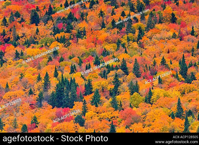 Autumn colors in the Laurentian Mountains. Great Lakes - St. Lawrence Forest Region. La Mauricie National Park Quebec Canada