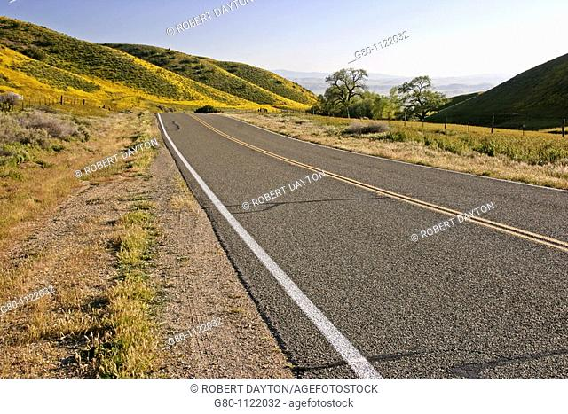 Wildflowers grow along State Route 58 in California