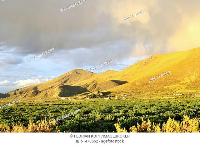 Landscape, weather, light atmosphere before the rain, Bolivian Altiplano highlands, Departamento Oruro, Bolivia, South America