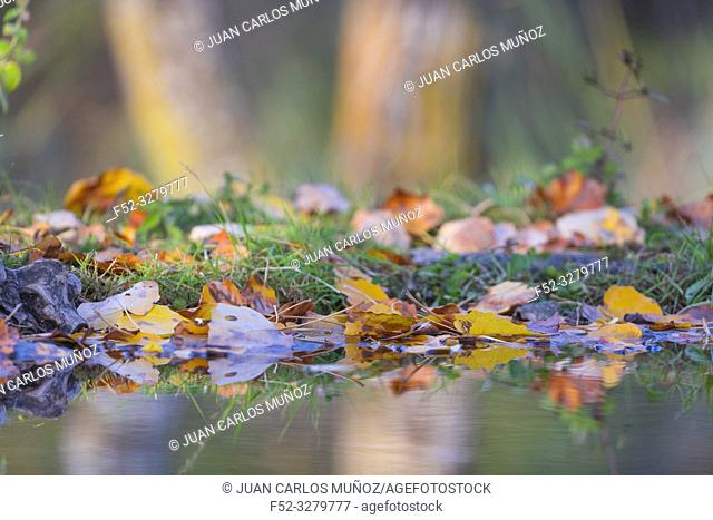 Reflections in the forest, Danube Delta, UNESCO WORLD HERITAGE, Tulcea County, Romania, Europe