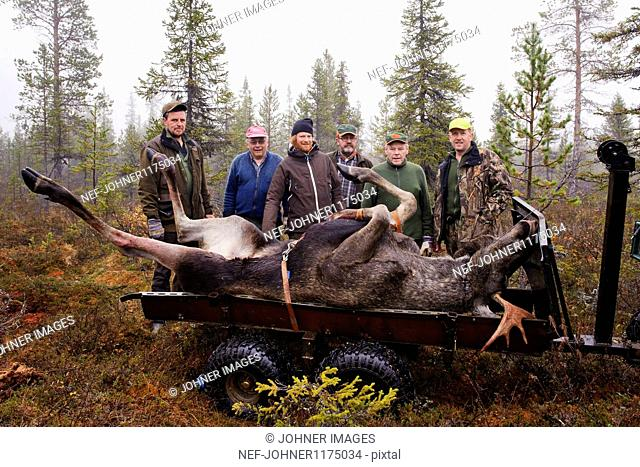 People pulling dead elk in forest