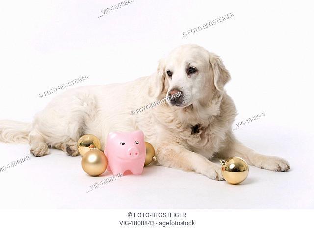 Hund mit Glücksschwein und Weihnachtskugeln . christmas dog | - 02/12/2009