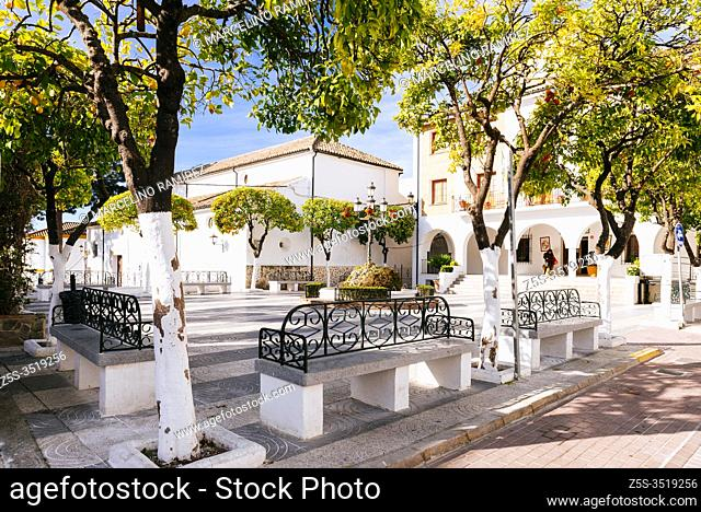 Orange trees in the Plaza de la Constitucion. Orange trees are widely used for street ornamentation and to provide shade