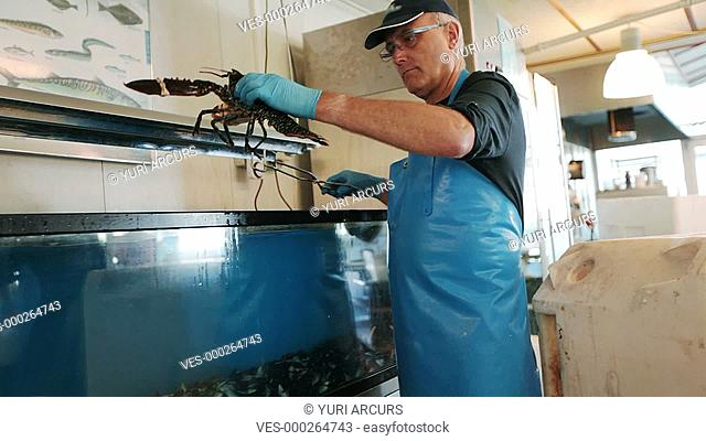 Happy fishmonger taking a live lobster out of a tank and showing it to you proudly