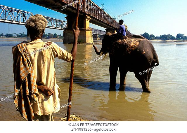 mahut riding an elephant at the Mahanadi river at Sonpur in India