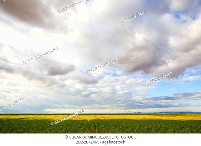 Farmland landscape. Belchite. Zaragoza province. Aragon. Spain