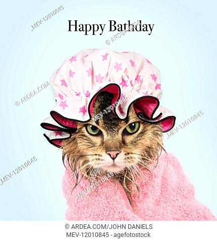 CAT. Tiffanie ( black tipped ) wet wrapped in a towel wearing a shower cap Digital manipulation