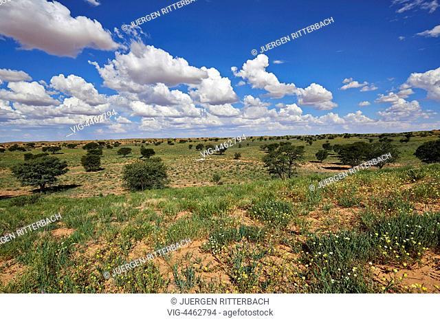 Kgalagadi Transfrontier Park, Kalahari, South Africa, Botswana, Africa - Kgalagadi Transfrontier Park, South Africa, Botswana, 24/02/2014