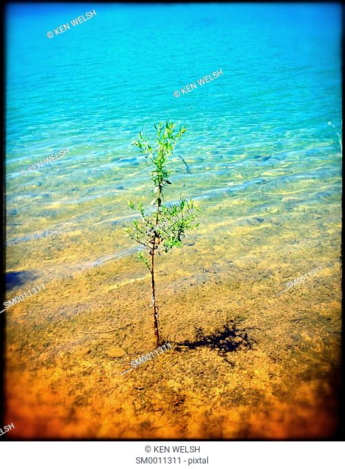 Lone tree growing in the water of a lake