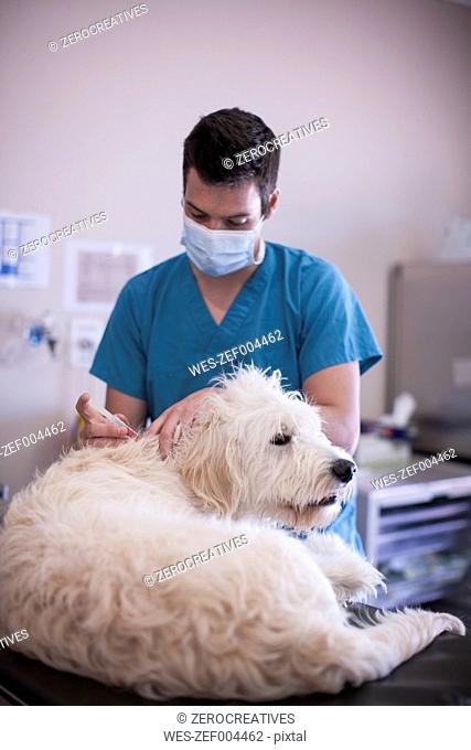 Veterinarian giving a dog an injection