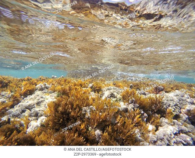 Underwater image in Las Rotas beach Natural park in Denia Alicante, Spain