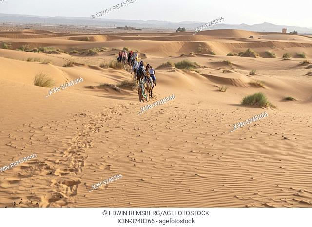 Caravan of People Traveling by Camel through the Desert, Merzouga, Morocco