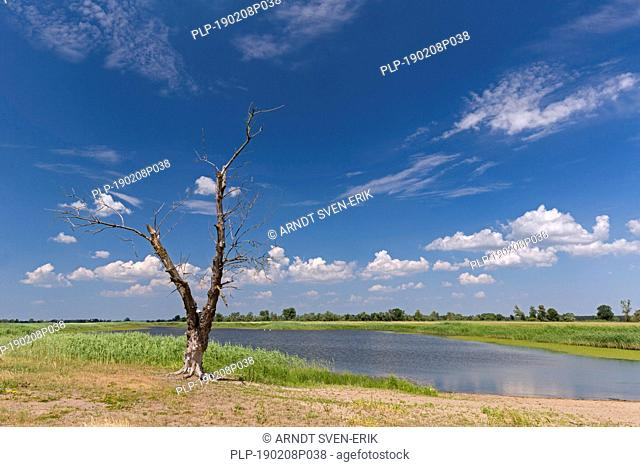 Dead tree trunk on bank of tributary stream of the river Oder at Oderbruch, moorland landscape near Oderberg, Brandenburg in eastern Germany