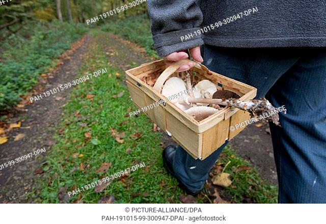 15 October 2019, Lower Saxony, Sehnde: A man in the Bockmerholz forest area in the Hanover region carries mushrooms in a basket to identify them at home with a...