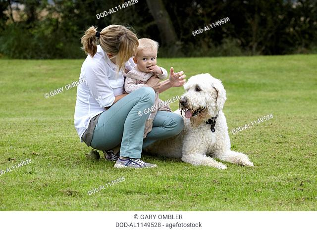 Labradoodle: with family