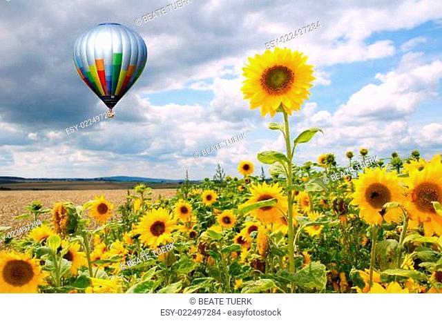 Heißluftballon über Sonnenblumenfeld