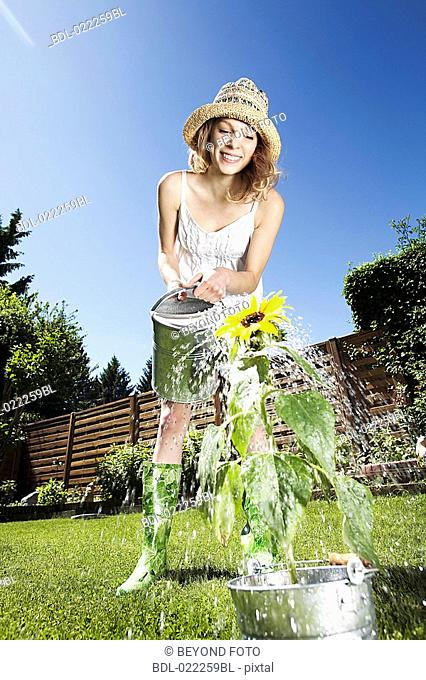 young woman watering sunflower