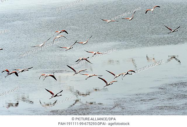 06 November 2019, Turkey, Didim: Flamingos fly over Lake Bafa. The water is an inland lake on the west coast of Turkey, formed from a former estuary