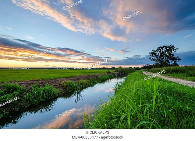 Fields in summer's sunset, Lomellina, Province of Pavia, Lombardy, Italy