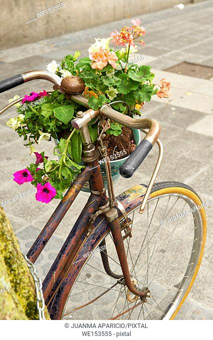 Flower Pot on the Bike, Bilbao, Biscay, Basque Country, Euskadi, Spain, Europe