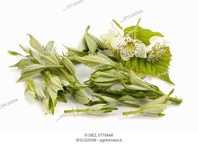 Blackberry leaves and flowers