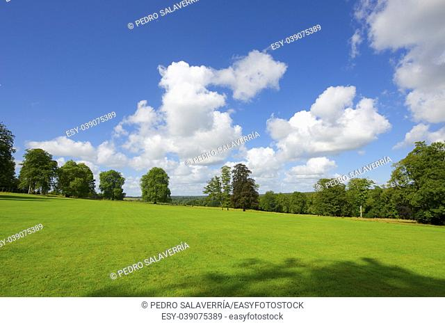 Green meadow with trees in Normandy, France