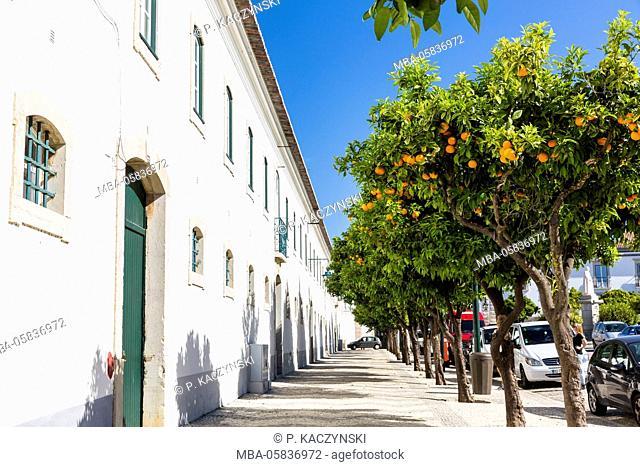 Orange trees in front of the Paço Episcopal, the episcopal palace, on the Square Largo da Sé, Faro, Algarve, Portugal