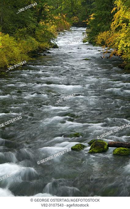 Upper McKenzie River in autumn, McKenzie Wild and Scenic River, McKenzie Pass-Santiam Pass National Scenic Byway, Willamette National Forest, Oregon