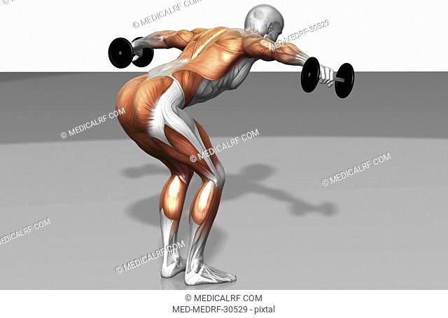 Dumbbell rear lateral raise Part 1 of 2