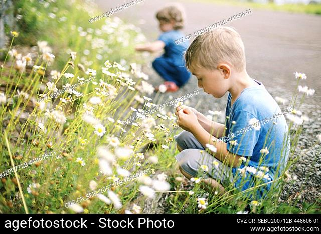 A little boy picking wild daisies on a hot and humid summer day