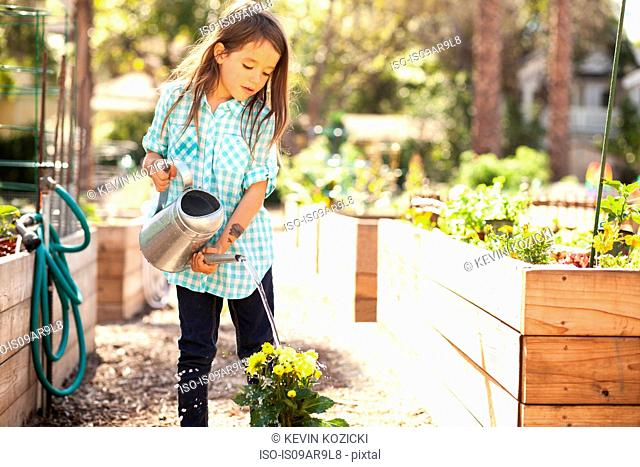 Girl watering flower plant in community garden
