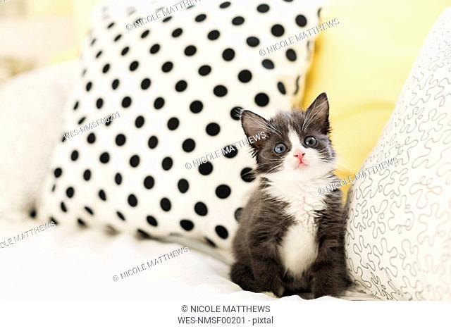 Starring kitten at home